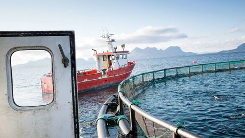 Kommunene kan tjene på mer fisk i oppdrettsanleggene. Foto: Ole Morten Melgård