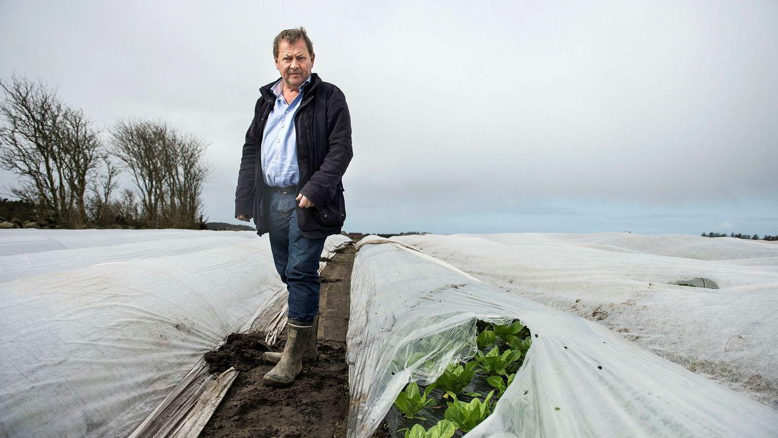 Salatbonde Einar Mikal Hanasand er en av mange aksjonærer som taper på Noreco. Her er Hanasand i åkeren på Randaberg.