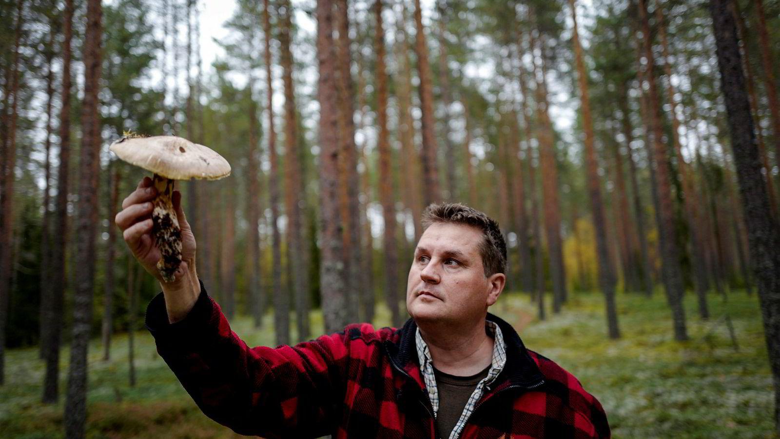 Soppekspert Tommy Østhagen har funnet en sjelden Matsutake-sopp i skogene rundt Elverum.