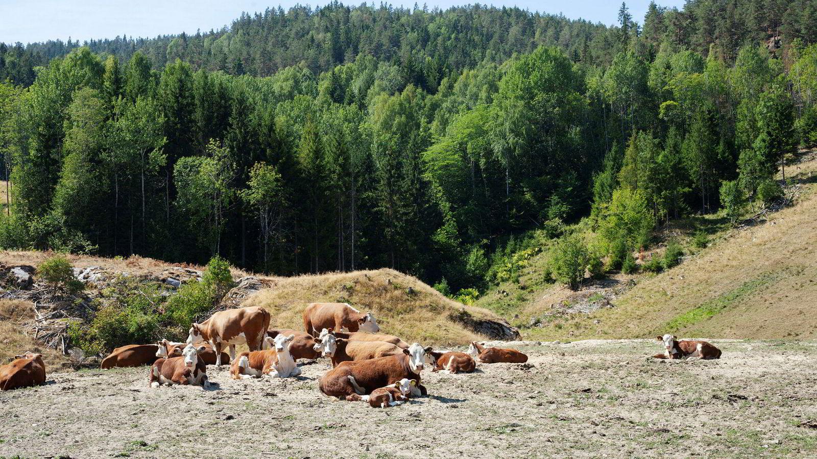 Jordbrukets inntekter er på vei ned, ifølge nye prognoser.