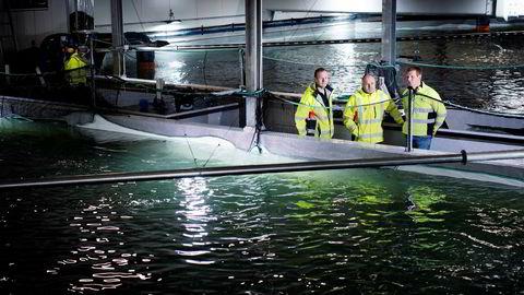 Brødrene Nils og Roger Viga driver nyetablerte Tytlandsvik Aqua postsmoltanlegg i Hjelmeland kommune sammen med Lars André Frønsdal (til høyre). Første byggetrinn koster 320 millioner kroner.