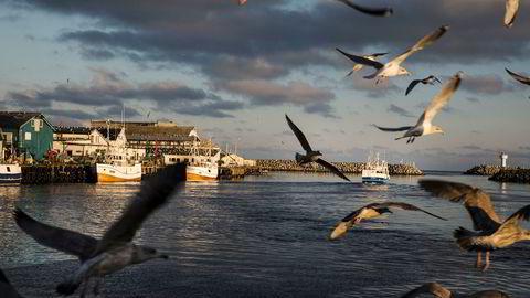 Med forvaltningsregimet i Norge vil imidlertid ikke den bedriftsøkonomiske lønnsomheten på lang sikt øke ved å redusere fiskeinnsatsen. Her fra havnen i Berlevåg og fiskebåten Josberg.