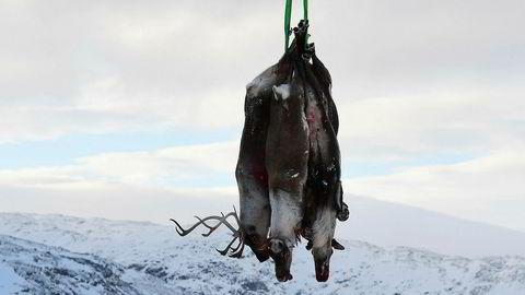 Som et ledd i kartlegging av skrantesyke er det besluttet at all storbukk i villreinstammen på Hardangervidda skal skytes ut kommende høst. Innleggsforfatterne er bekymret for vedtaket.