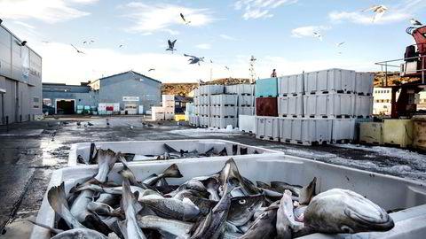 Mengden gikk ned, men prisen gikk opp for norsk fisk i fjor. Her fra fiskebruket Polar Seafood i Berlevåg