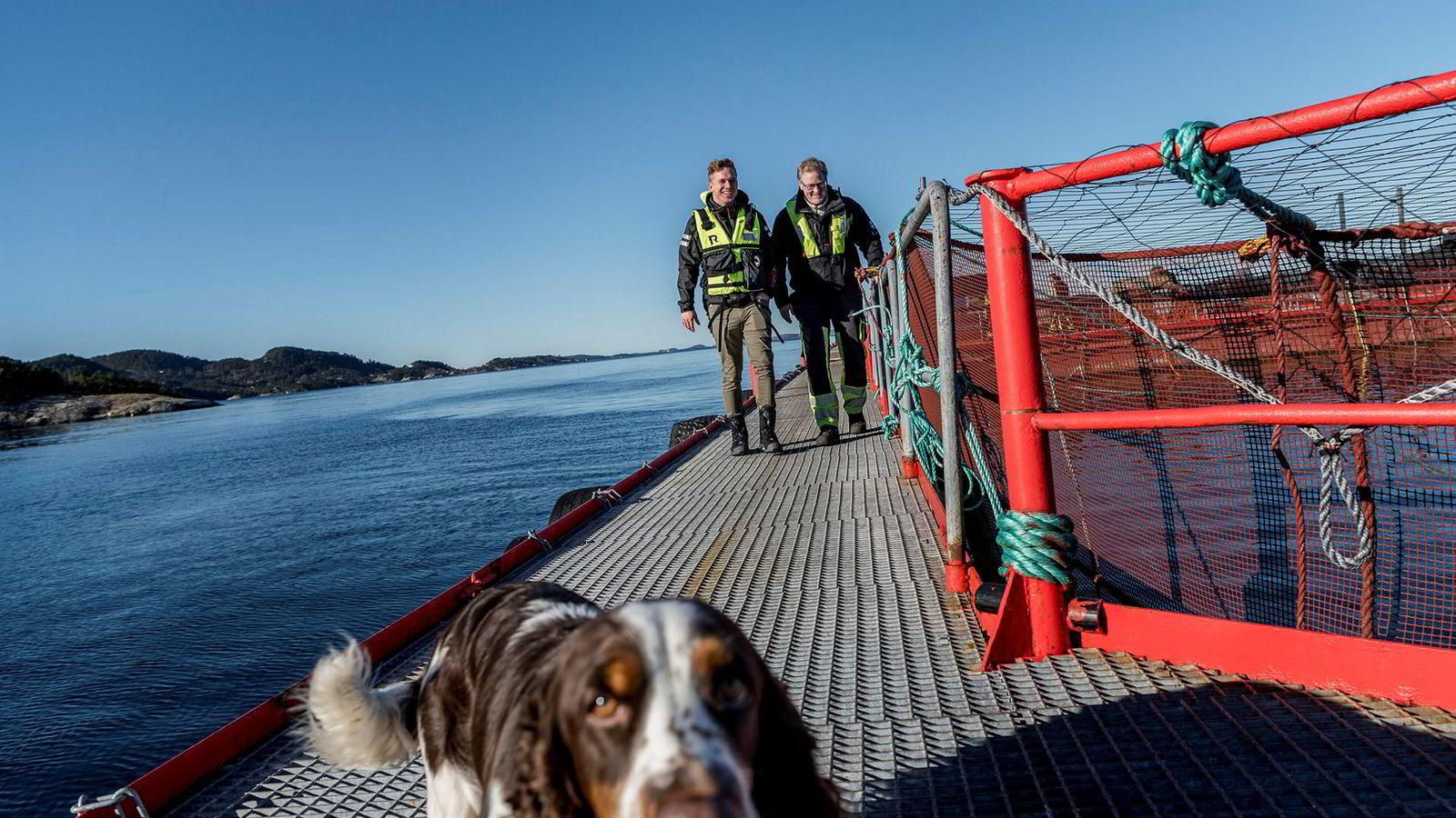 Her på Indre Slettevikneset oppdrettsanlegg har Blue Lice installert oppfinnelsen de mener er løsningen på problemet med lakselus. Lars-Kristian Opstad i Blue Lice (til venstre) vil derimot ikke si hva den består av eller vise den frem til DN. Til høyre Eirik Svabø, driftsleder i Bremnes Seashore.