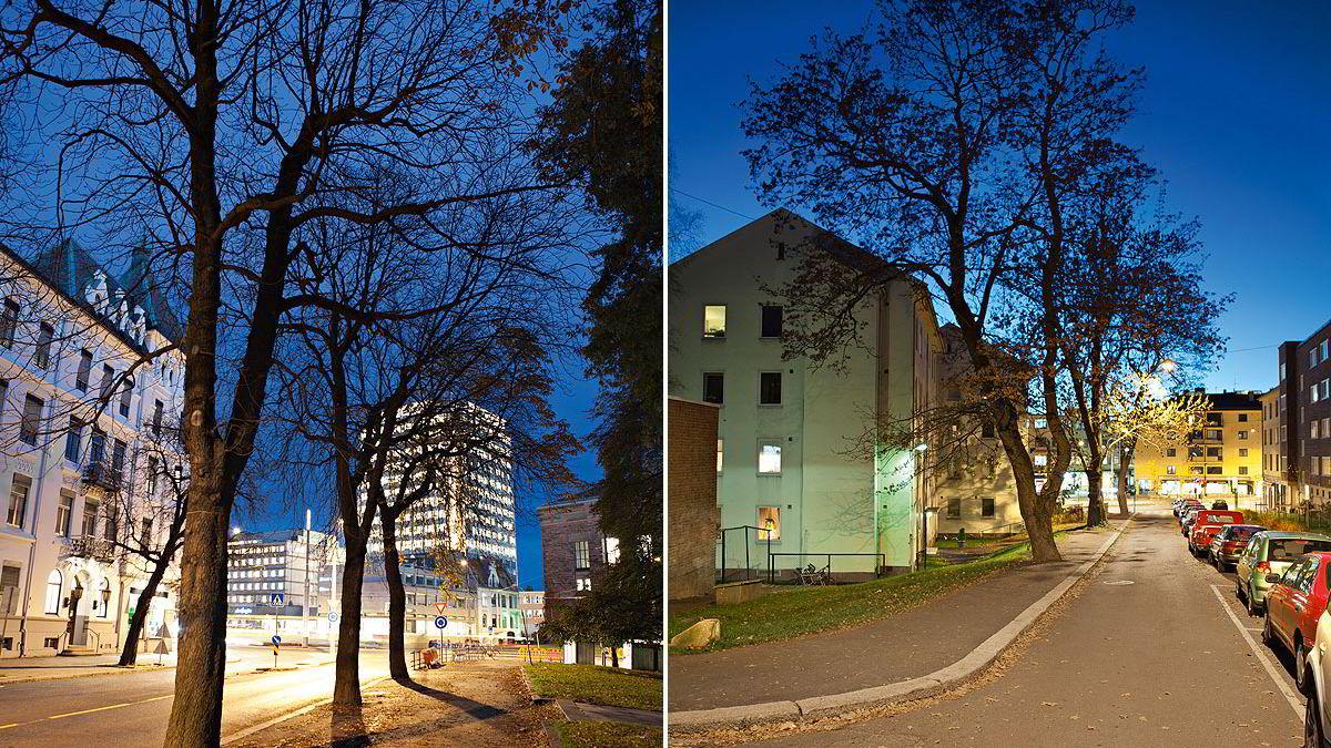 Trær i storbyområder har flere positive effekter enn de fleste er klar over. Foto: