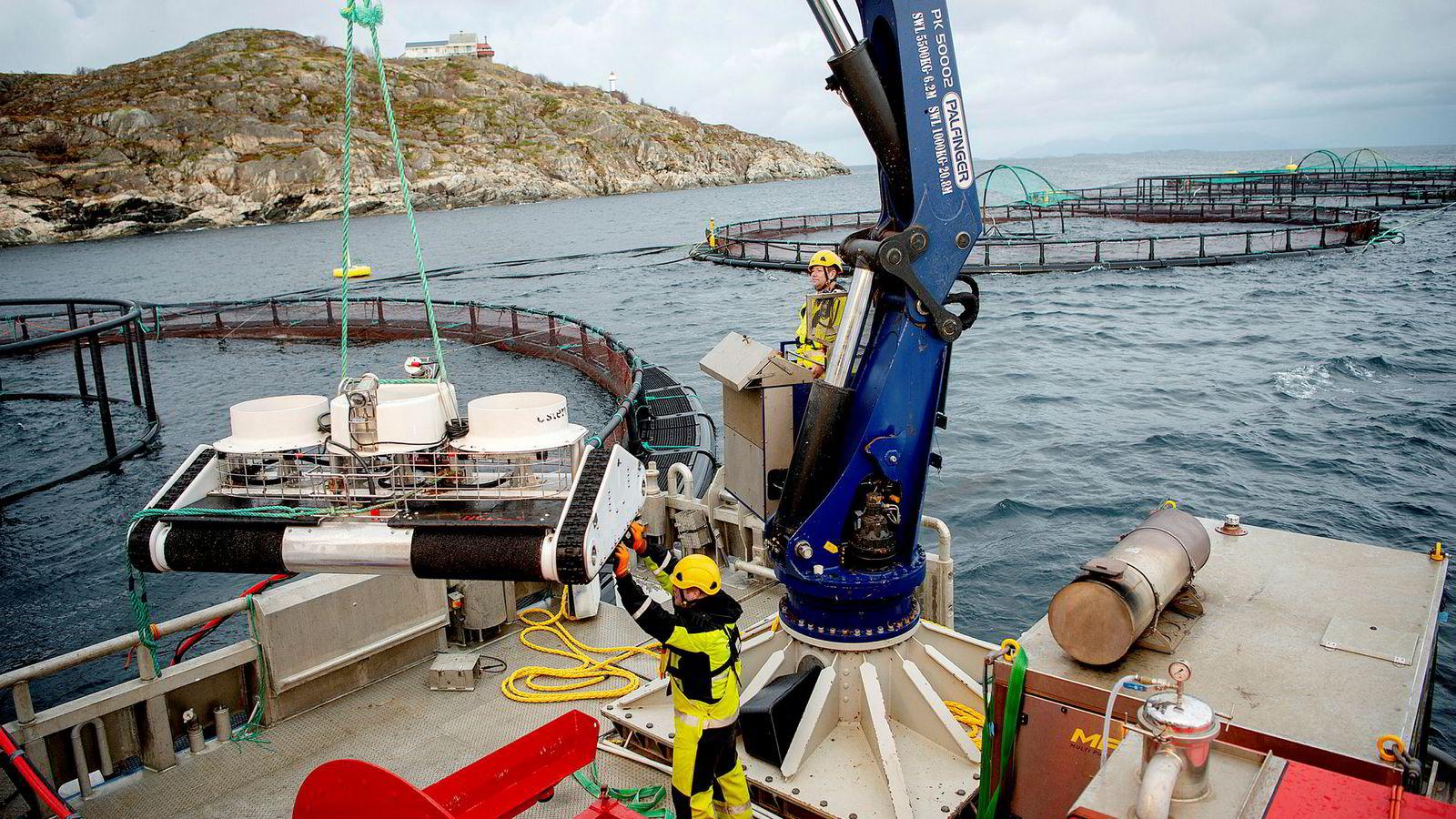 Driftsoperatør Mattias Bårnes (til venstre) og driftsoperatør Stig Edvardsen på Folden Akvas servicebåt heiser ned en vaskerobot i en av oppdrettsmerdene til Lofoten Sjøprodukter ved holmen Bjørnøya ved øya Landegode, utenfor Bodø.