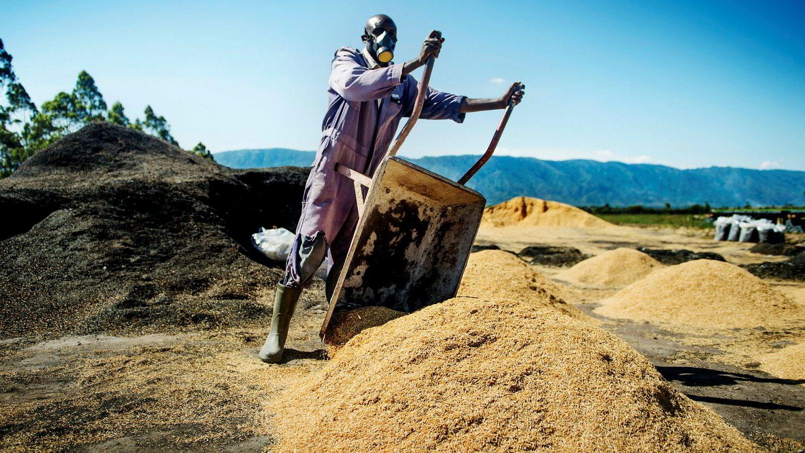 I 1966 levde halve verden i ekstrem fattigdom. I 2017 var det redusert til ni prosent, skriver artikkelforfatteren. Her fra en eukalyptusplantasje i Tanzania der risskall brennes og brukes som gjødsel.