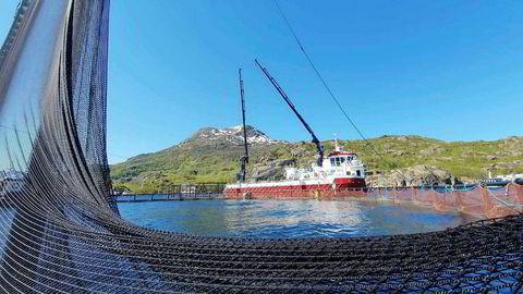 Nordlaks flyttet forrige uke nær to millioner laks vekk fra dødsalgene, etter å ha mistet 1,3 millioner laks i Troms. Nå er et av selskapets anlegg i Nordland rammet av alger.