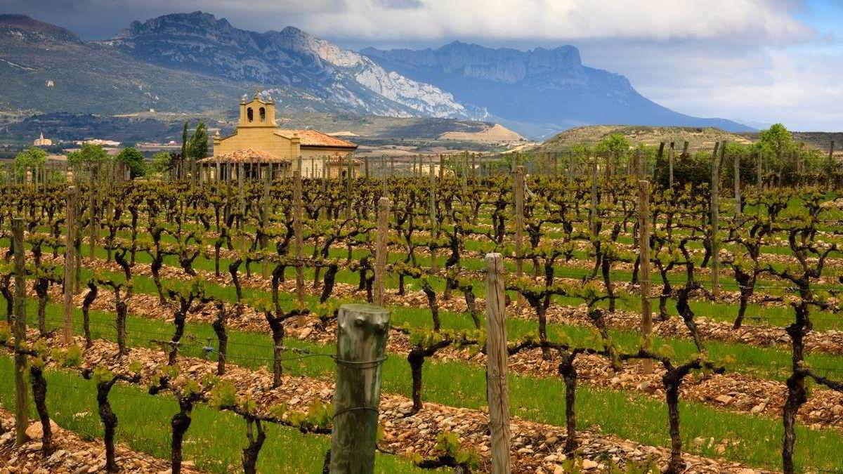 Vinmark i Rioja Foto: James Janisse