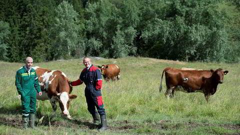 Norske data om landbruket kan bli eksportvare, og prises til 300 millioner kroner. Her er divisjonsdirektør Trond Fidje (til venstre) i Felleskjøpet Agri og Johnny Ødegård, konserndirektør med ansvar for rådgivning på besøk ved NMBU på Ås.