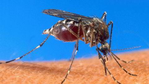 Bill Gates har tatt til orde for å bruke genredigering til å introdusere genvåpen mot malariamyggen, som dreper cirka 450.000 mennesker hvert år. Amerikanske forskere har for lengst gjort vellykkede forsøk med CRISPR for å blokkere parasitten som forårsaker malaria.