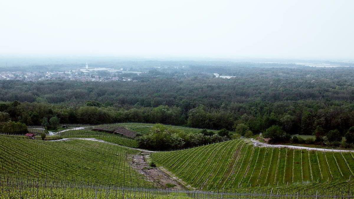 Gattinaras og Nervis beste vinmark Molsino med utsikt mot Novara. Nå er den på norske hender, med Erling Astrup og Christopher Moestue som hovedeiere.