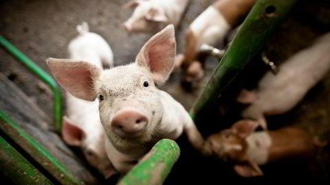 Minst fem av syv bønder som eksponeres i NRK Brennpunkt-dokumentaren «Griseindustriens hemmeligheter» leverer fortsatt kjøtt.