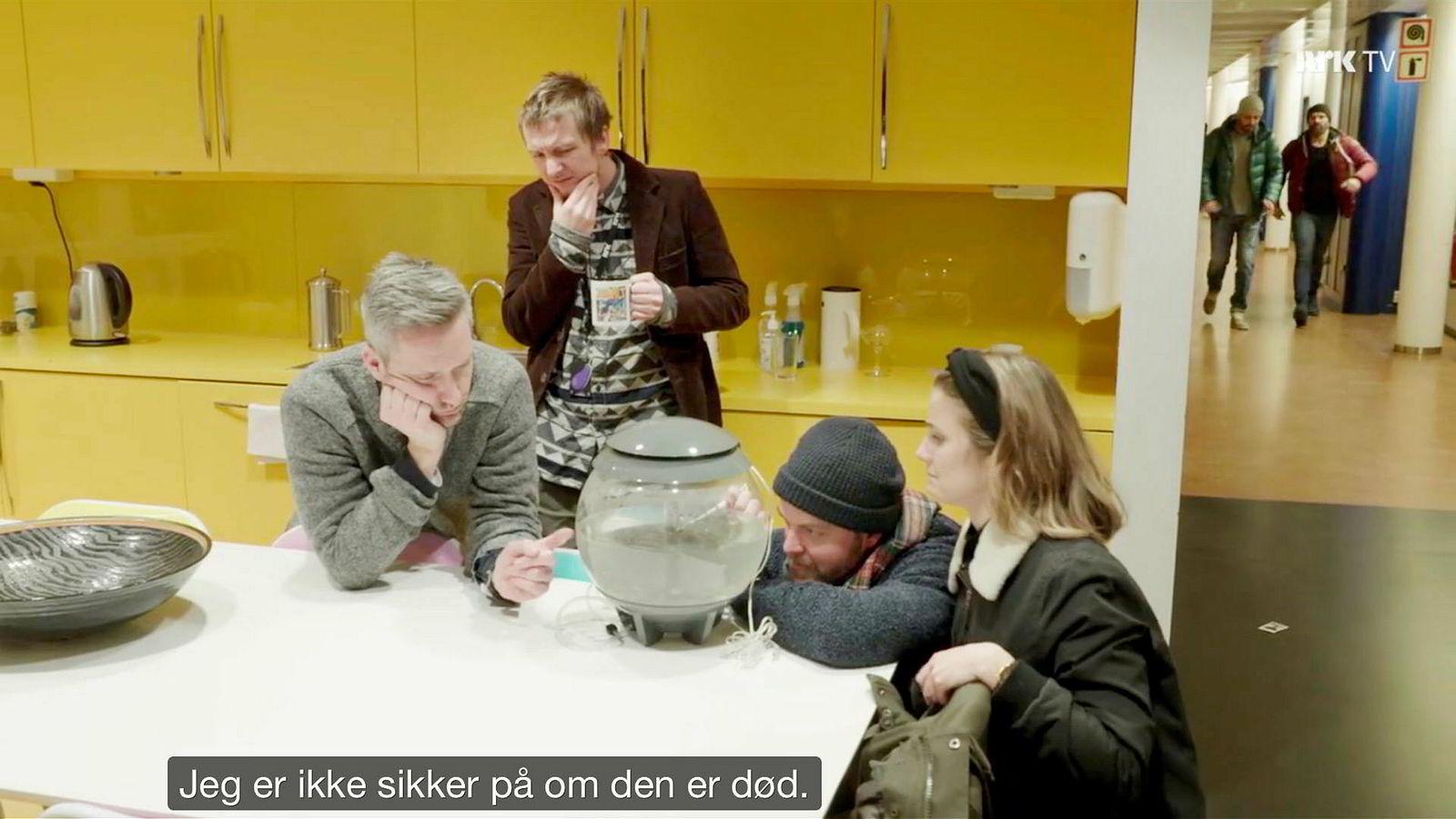 Skjermdump fra NRK Satiriks' episode hvor programlederne tester om akvariefisken overlever giftutslipp i gullfiskbollen.