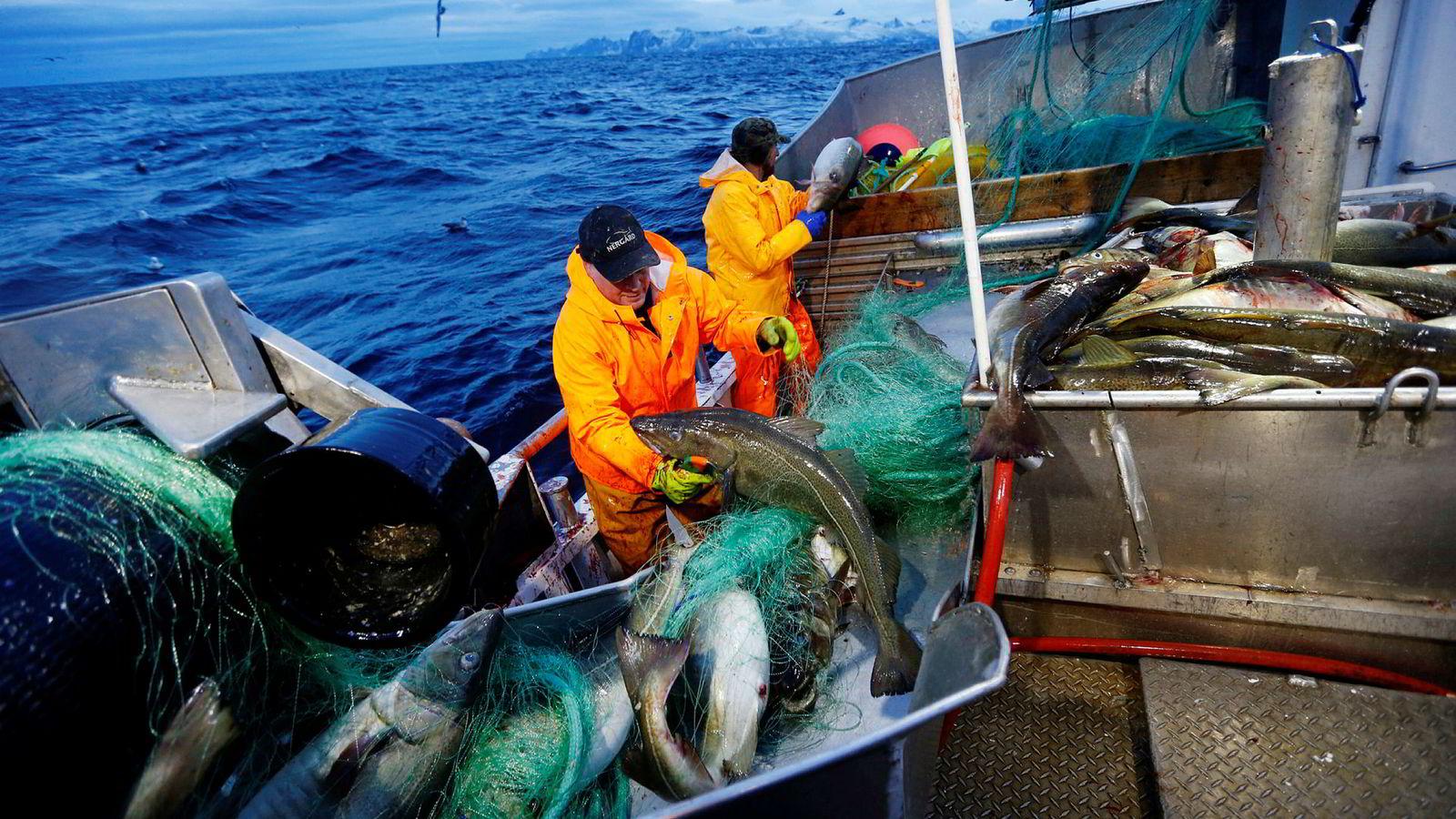 Mens flåten tjener gode penger, presses marginene i fiskeindustrien på grunn av økt konkurranse om råstoffet, skriver innleggsforfatteren. Her fra det årlige skreifisket ved Gryllefjord, Senja.