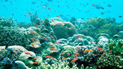 Verdenshavene blir sykere, ifølge forskere. Foto: