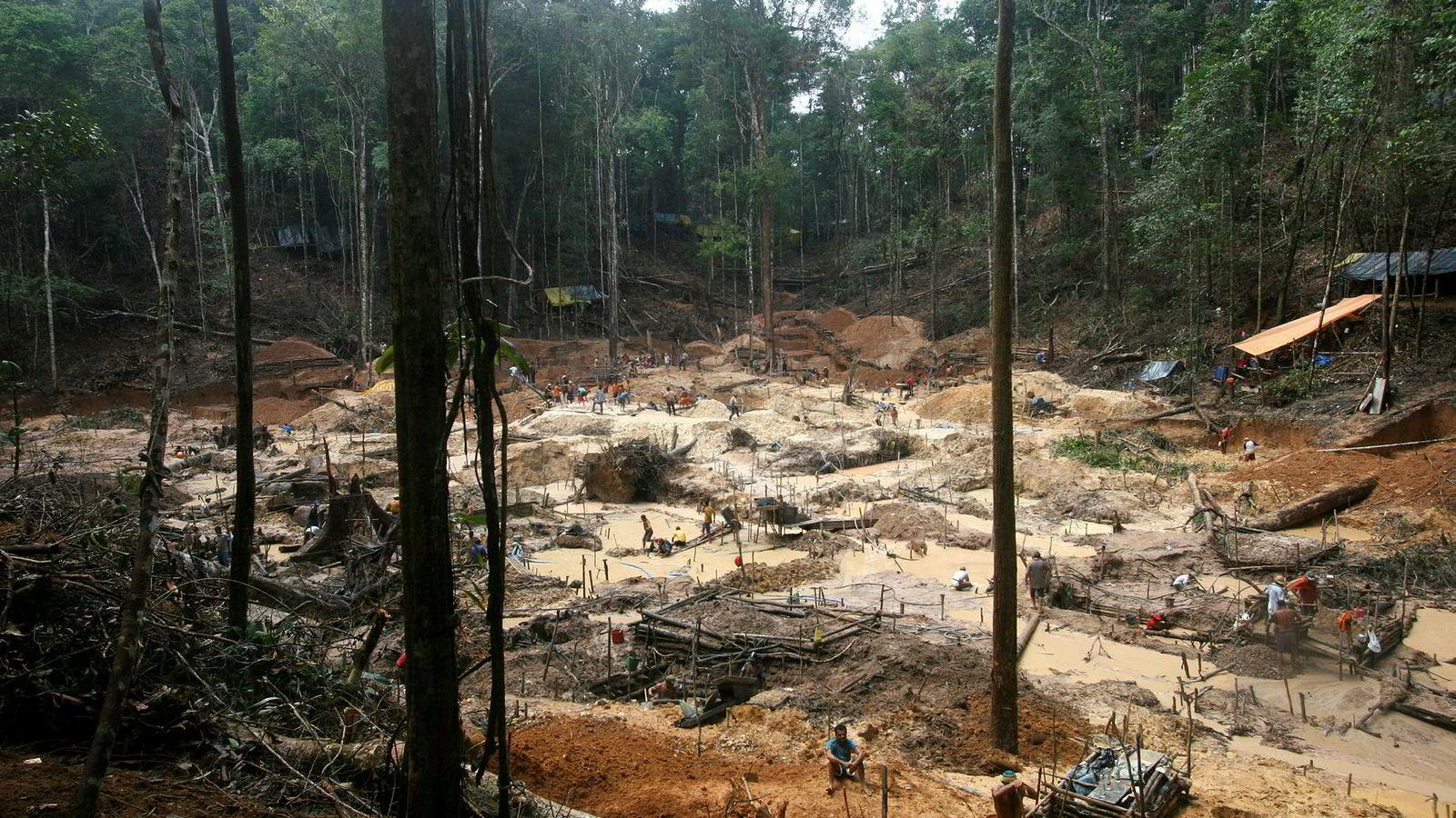 Kravet om vern av regnskogen bør være ufravikelig for Norge. Det kan også danne en presedens, skriver artikkelforfatteren. Her fra regnskogen i Amazonas, Brasil, der avskoging er et stort problem.