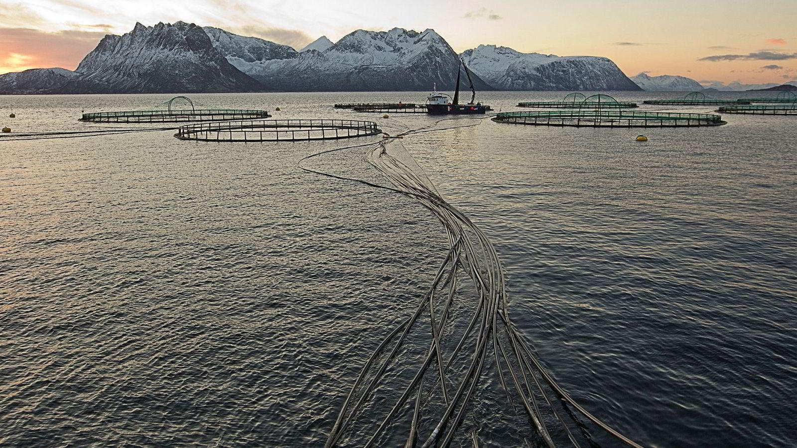 Sjømatselskapet Mowi må stenge to lokaliteter for oppdrettsfiske i Troms, etter at de fikk påvist en alvorlig laksesykdom. Bildet er fra Flakstadvåg i Senja.