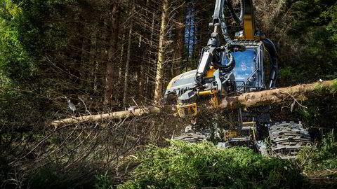 Å bruke trær til bioenergi er like skadelig for klimaet som å bruke kull, ifølge ny forskning.