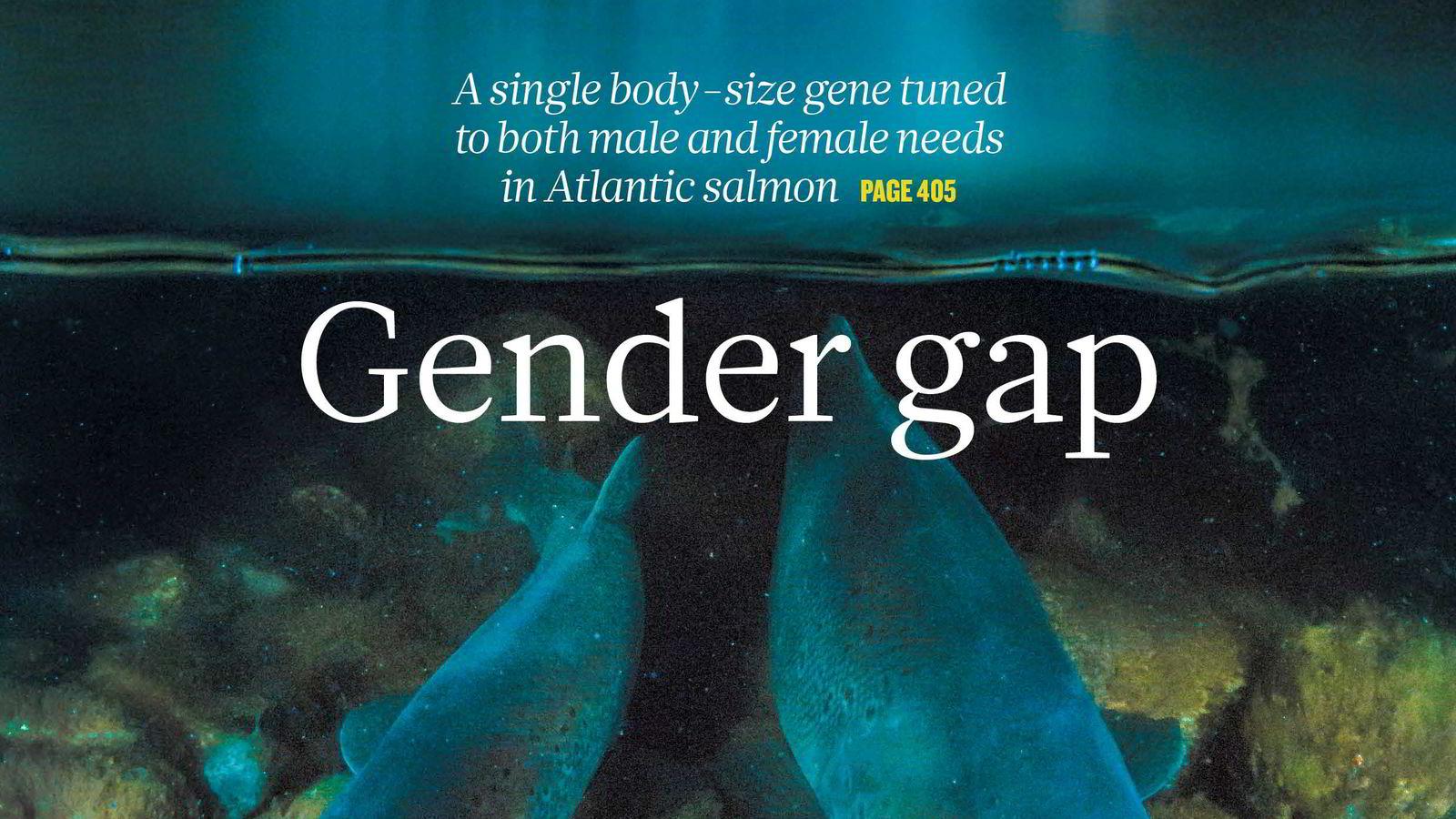 LAKSENS PUBERTETSGEN               Forskergruppen som har funnet laksens pubertetsgen fyller forsiden på anerkjente Nature, med bilde tatt av Audun Rikardsen, fotograf og professor ved Universitetet i Tromsø.
