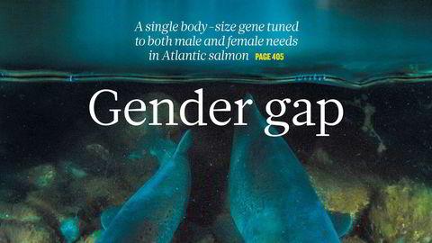 LAKSENS PUBERTETSGEN                   Forskergruppen som har funnet laksens pubertetsgen fyller forsiden på anerkjente Nature, med bilde tatt av Audun Rikardsen, fotograf og professor ved Universitetet i Tromsø
