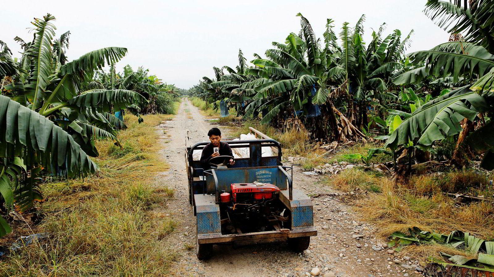 Kinesiske selskaper ekspanderer til Sørøst-Asia og Sentral-Asia som en del av den «nye Silkeveien». I Laos har kinesiske investorer etablert noen av verdens største bananplantasjer for å selge til Kina. Små produsenter makter ikke å konkurrere.