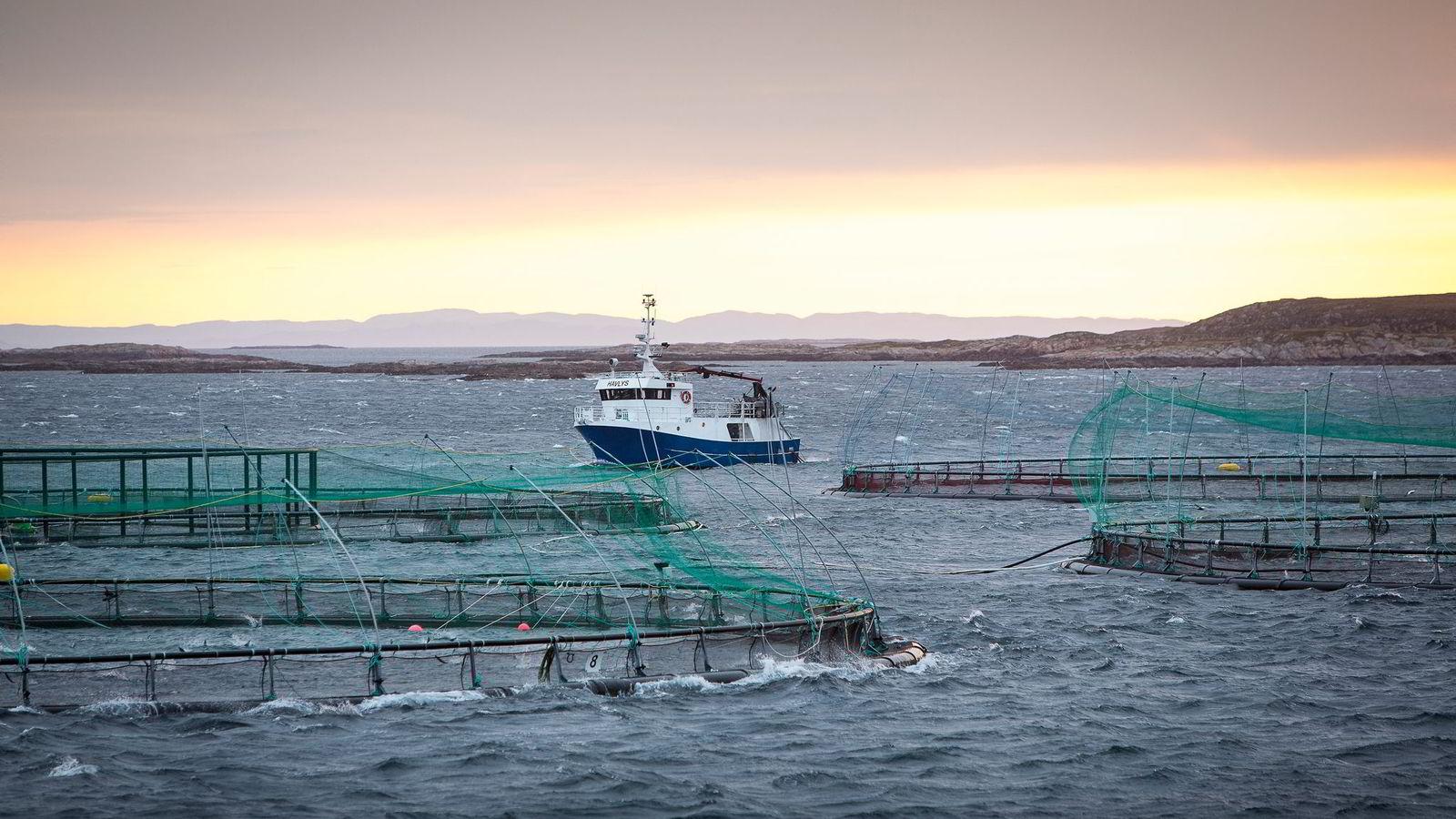 Oppdrett drives i fjord- og kystallmenningen, og her må mange interesser ivaretas, både kystfiskernes, andre næringsinteresser og kommende generasjoners muligheter, skriver artikkelforfatterne. Her fra oppdrettsanlegg på Frøya.