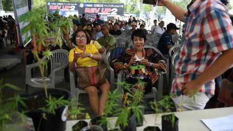 Den thailandske provinsen Buriram arrangerte den første marihuanafestivalen tidligere i år. Pasienter som benytter marihuana i forbindelse med sykdom kunne registrere seg i forbindelse med et nasjonalt amnesti.