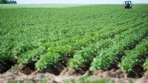 Etterspørselen etter økologisk mat øker. Nå stiger også antall økobønder igjen. Foto: Per Ståle Bugjerde