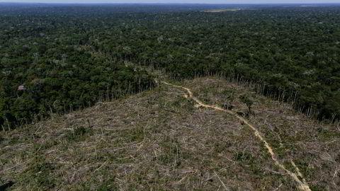 Enorme områder huges ned i regnskogen i Amazonas hvert år.