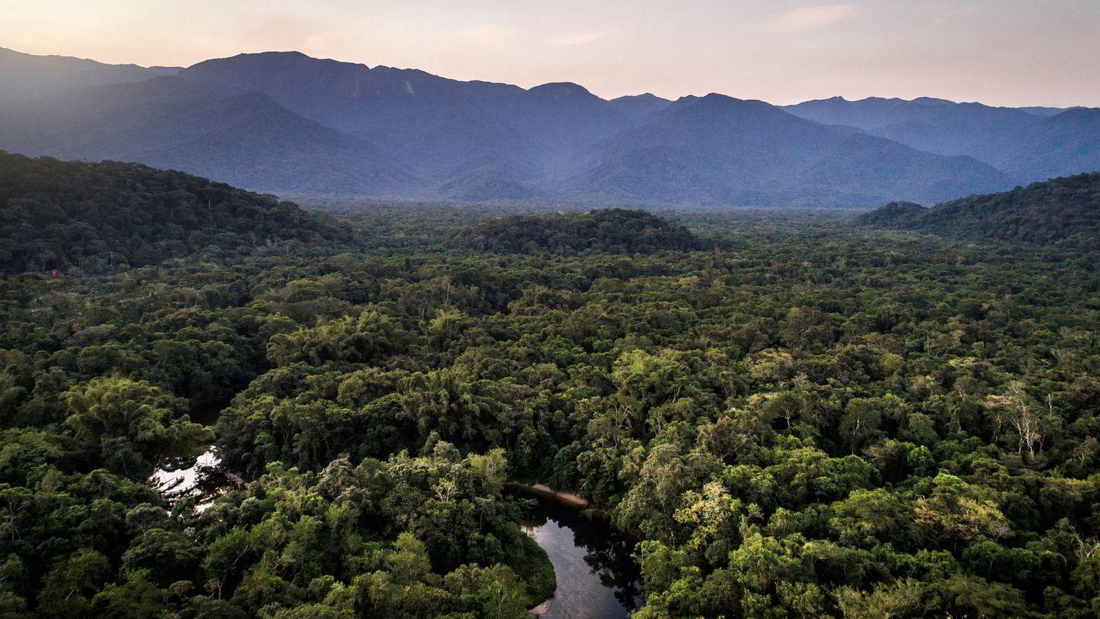 Majoritetseieren i Equinor, det norske folk, har vist seg villig til å gi avkall på penger for å verne Amazonas, skriver artikkelforfatteren.