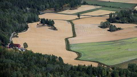 Tørken førte til at avlingene til svært mange bønder ble dårlige i sommer.