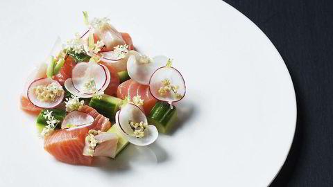 Hylleblomstceviche med laks og makrell