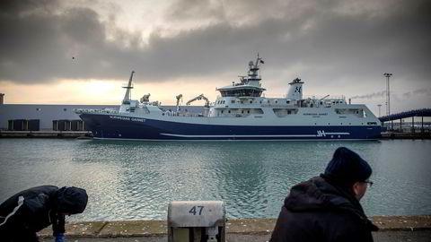 Slakteskipet «Norwegian Gannet», her i havn ved mottaksanlegget i Hirtshals, er sendt nordover for å hjelpe oppdretterne som er rammet av omfattende algedød.