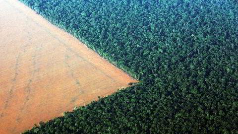 Vi er dypt bekymret for konsekvensene av den økte ulovlige avskogingen i Brasil, skriver Equinors Margareth Øvrum.