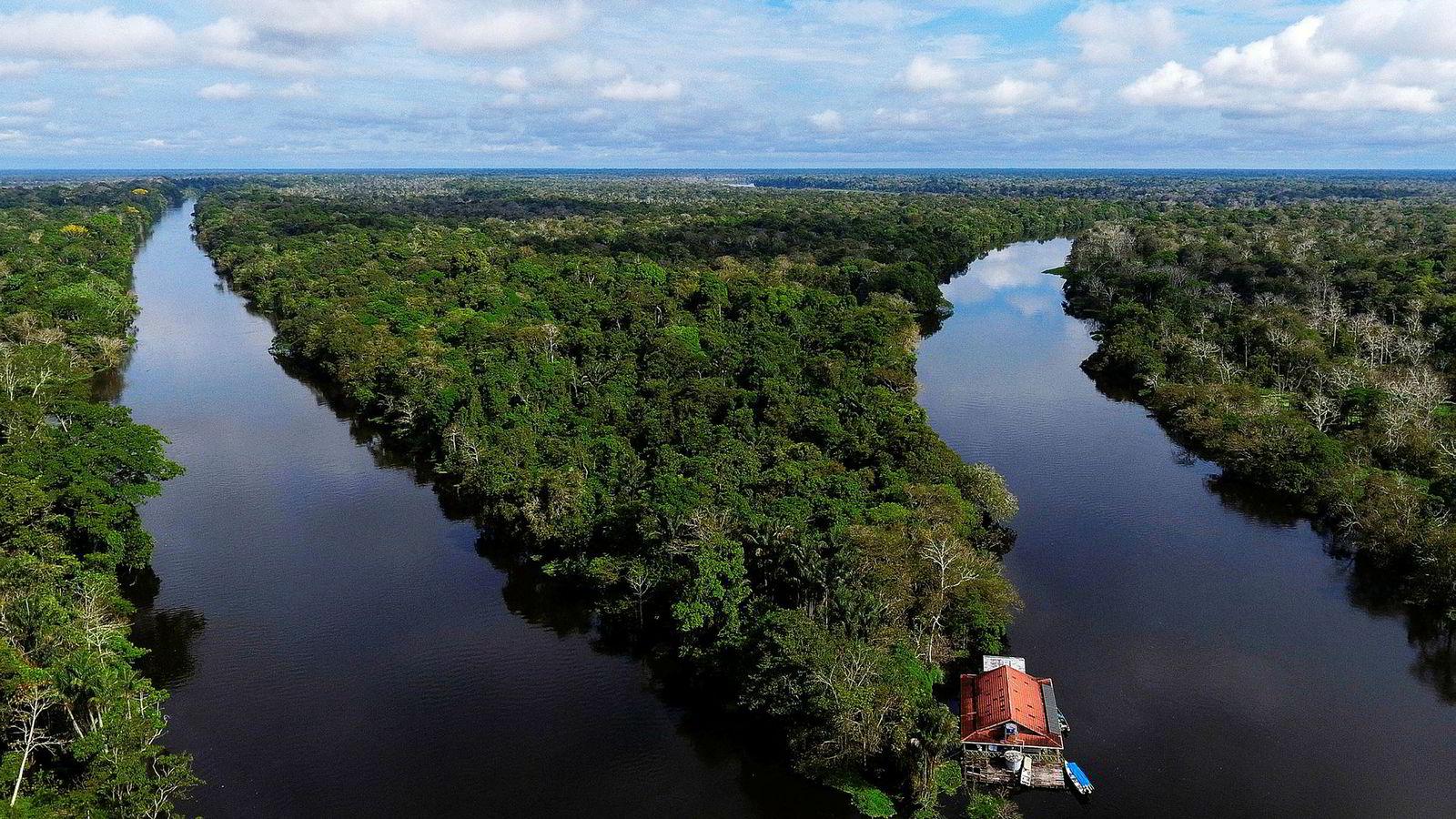 Brasils nye høyreradikale og erkekonservative president har lovet å fjerne urbefolkningenes rettigheter i Amazonas (bildet) slik at områdene blir kommersielt tilgjengelige.