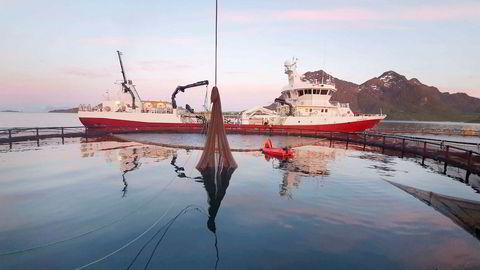 Natt til torsdag ble Nordlaks ferdig med å tømme 1,5 millioner laks fra sitt anlegg i Våtvika i Lofoten. To brønnbåter transporterte laks verdt 400 millioner kroner vekk fra dødelige alger og i sikkerhet lenger vest i Lofoten.