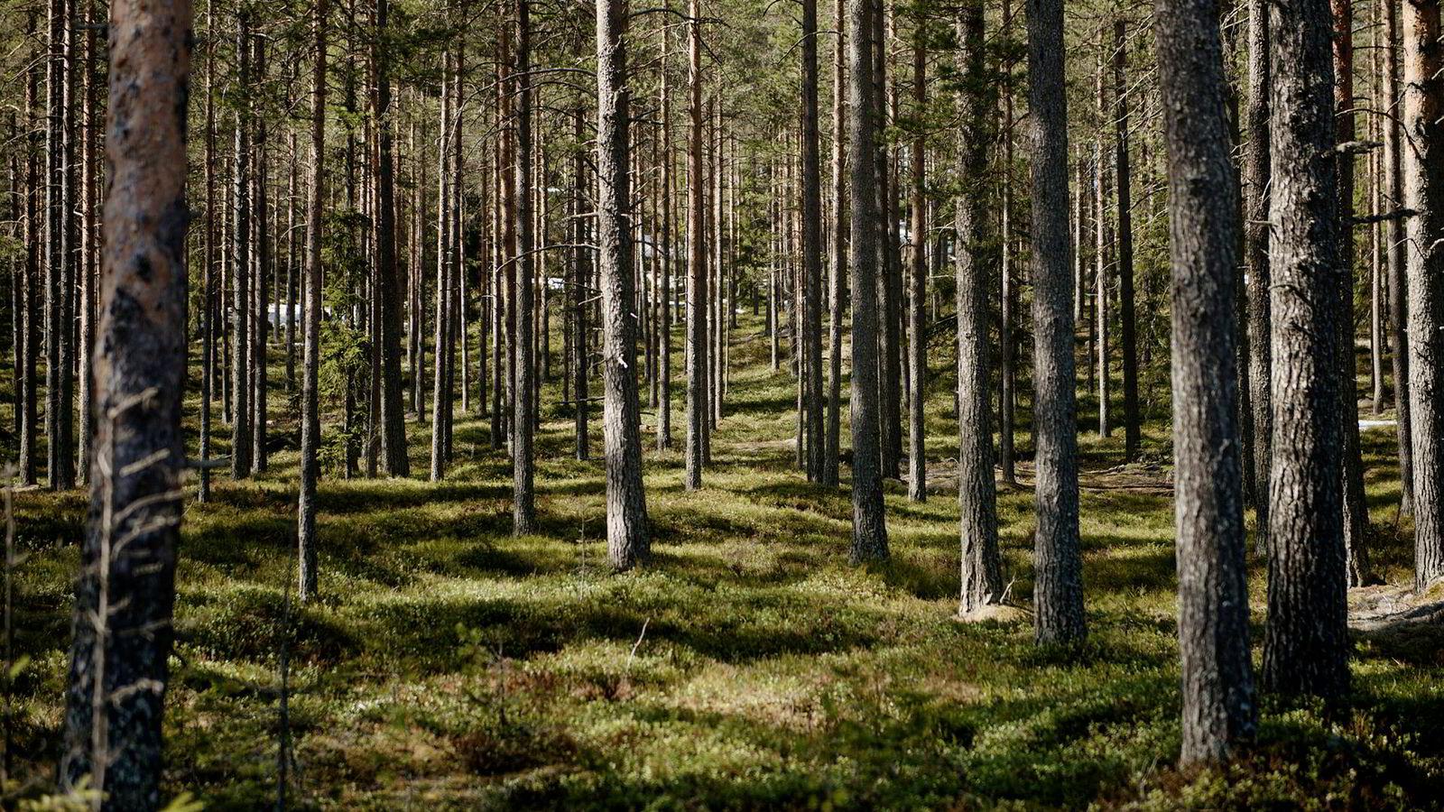 Store mengder karbon lagres i skogen. Om det blir mindre skog kan det ha negative konsekvenser for klimaet på jorden, skriver innleggsforfatterne.