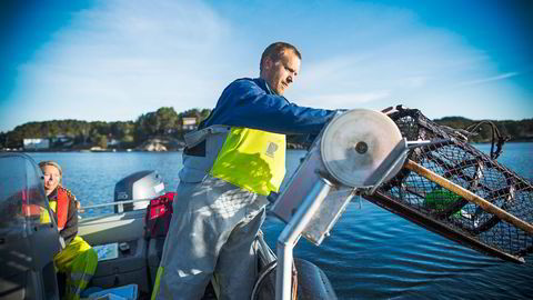 VIRKER: Hummerforsker Alf Ring Kleiven ved Havforskningsinstituttet sier etablering av hummerreservater er svært effektivt for å bedre bestanden. Foto: Sondre Steen Holvik