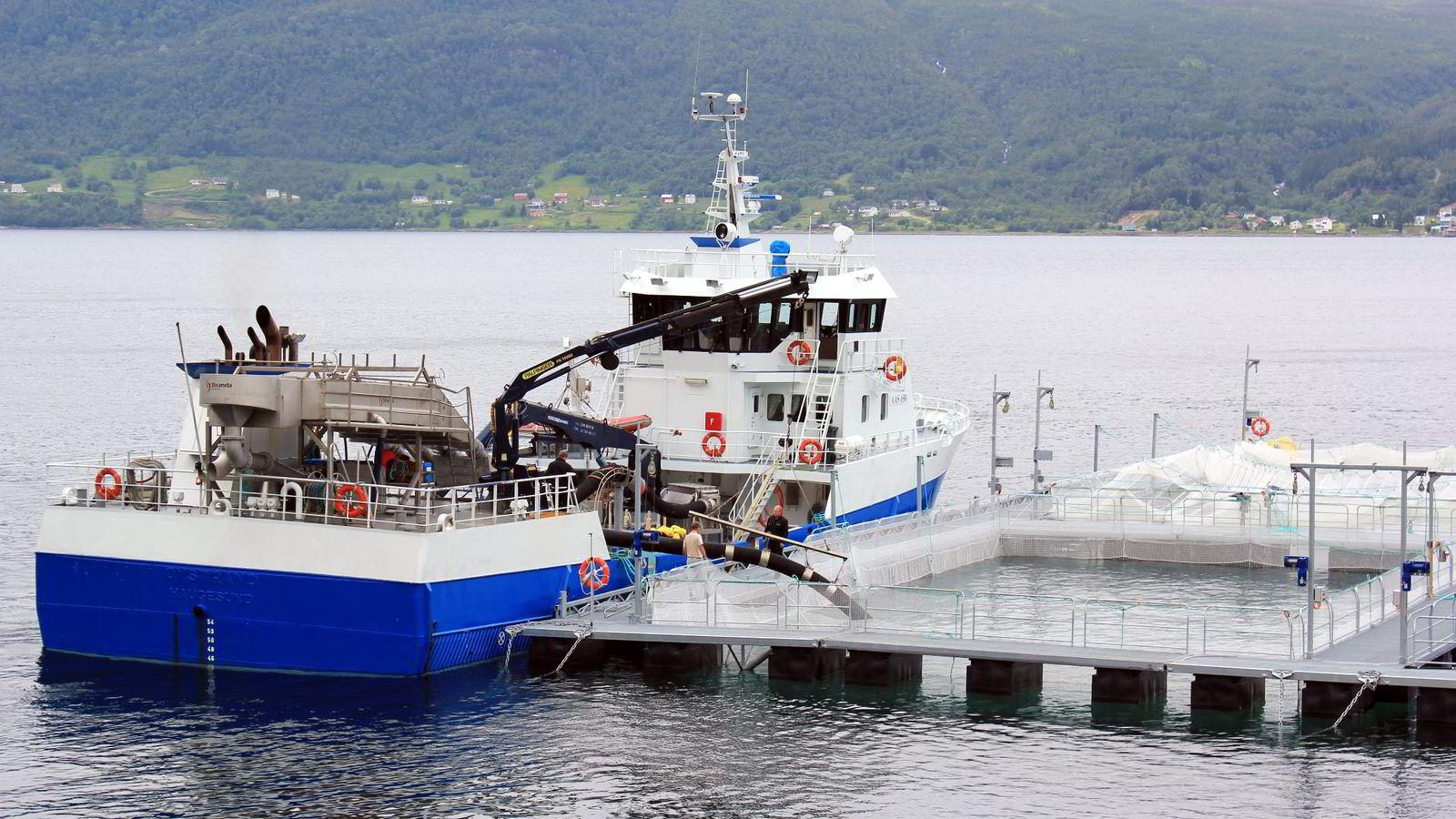 Astafjord fiskeslakteri er en av de største arbeidsgiverne i  kommunen med høyest sykefravær i landet - Gratangen. Foto: Mats Lundberg/Astafjord.