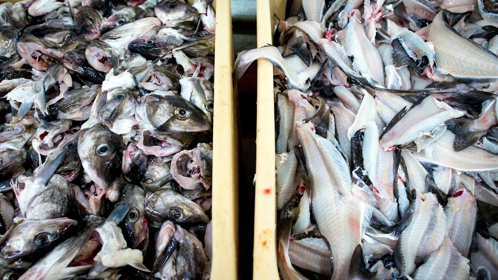 72 prosent av norsk fisk blir sendt ut av landet for videreforedling i fiskeindustrien i andre land. Hadde vi i stedet bearbeidet den i Norge, kunne verdien av dagens eksport økt med 30 milliarder kroner.