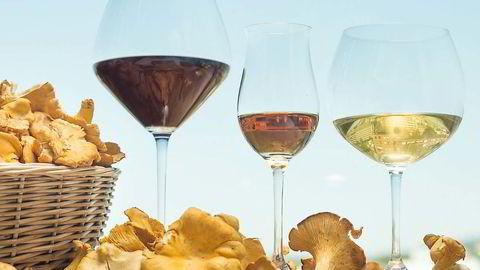 Bestevenner. Soppen er full av karakter og terroir, og passer til vin både som hovedingrediens og tilbehør. Foto: Luca Kleve-Ruud