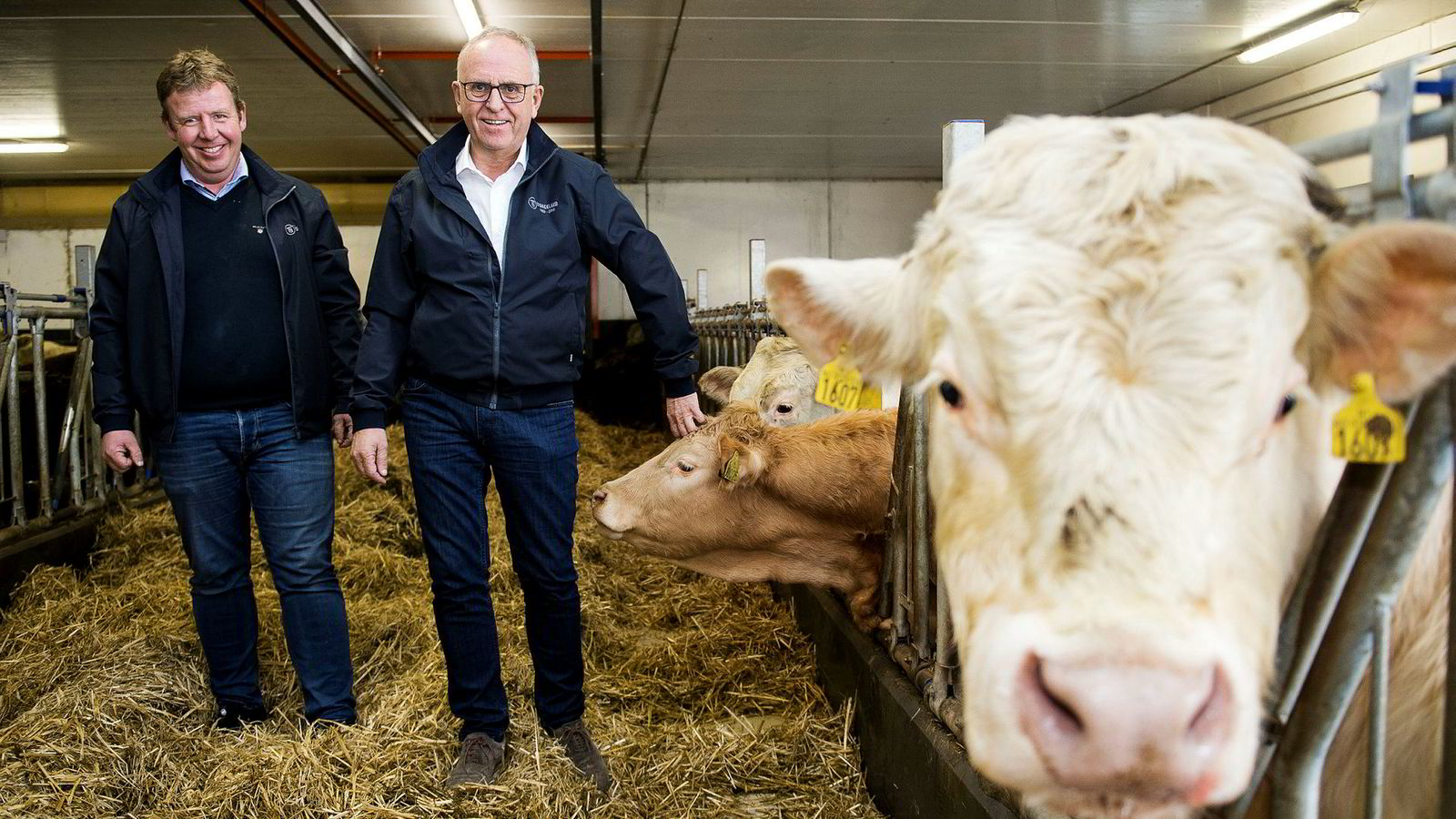Tommy Stangeland, til venstre, har brukt en del av overskuddet fra Stangeland Maskin til å bygge opp en gård med eksklusive okser. Her sammen med faren Olav.