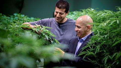 Grønne fingre. Jessie Flores (til høyre) er ansvarlig for økonomisk utvikling i ørkenbyen Adelanto, som er i ferd med å endre seg drastisk. 44 lisenser til å dyrke marihuana i storskala er på plass. Flere kommer. En av dem som er i gang, er Adam Shahin