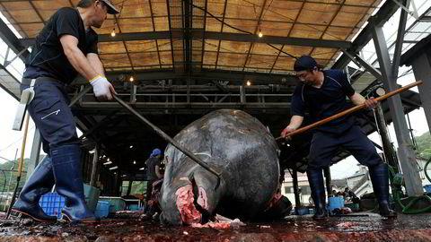 Japanske hvalfangere er på vei ut for å fange hval igjen. Her slaktes og parteres en hval i Japan ved en tidligere anledning.