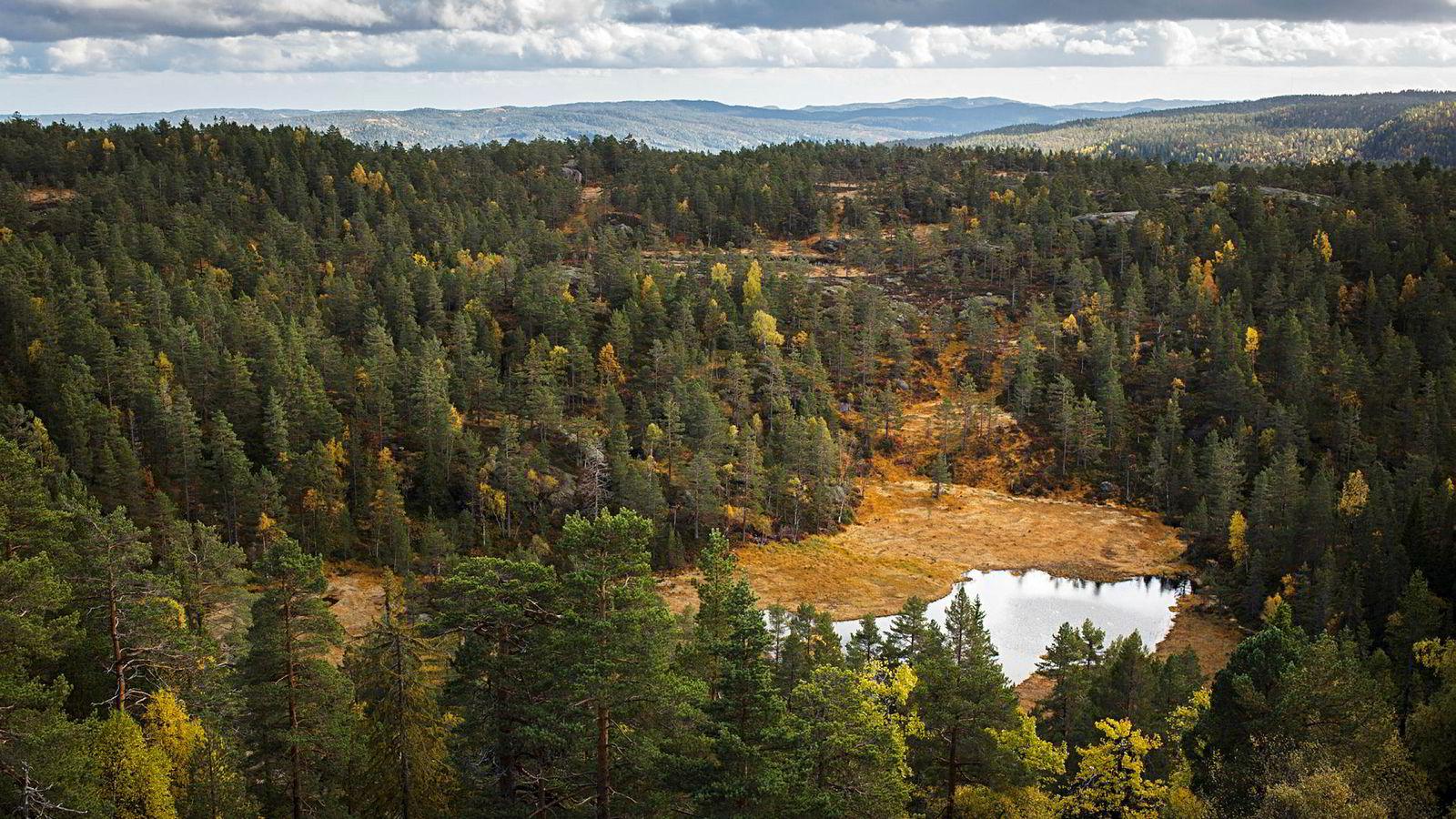 I skogområder der nedbrytningen går sakte, på grunn av sesongvariasjoner og et kaldt og tørt klima, slik som i Nord-Amerika, Nord-Europa og Russland, er det de såkalte ektomykorrhiza-soppene som dominerer.