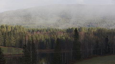 Norge har mer enn nok bioressurser selv, import av biodrivstoff av palmeolje er ikke nødvendig, mener Norges Skogeierforbund. Foto: Berit Roald /