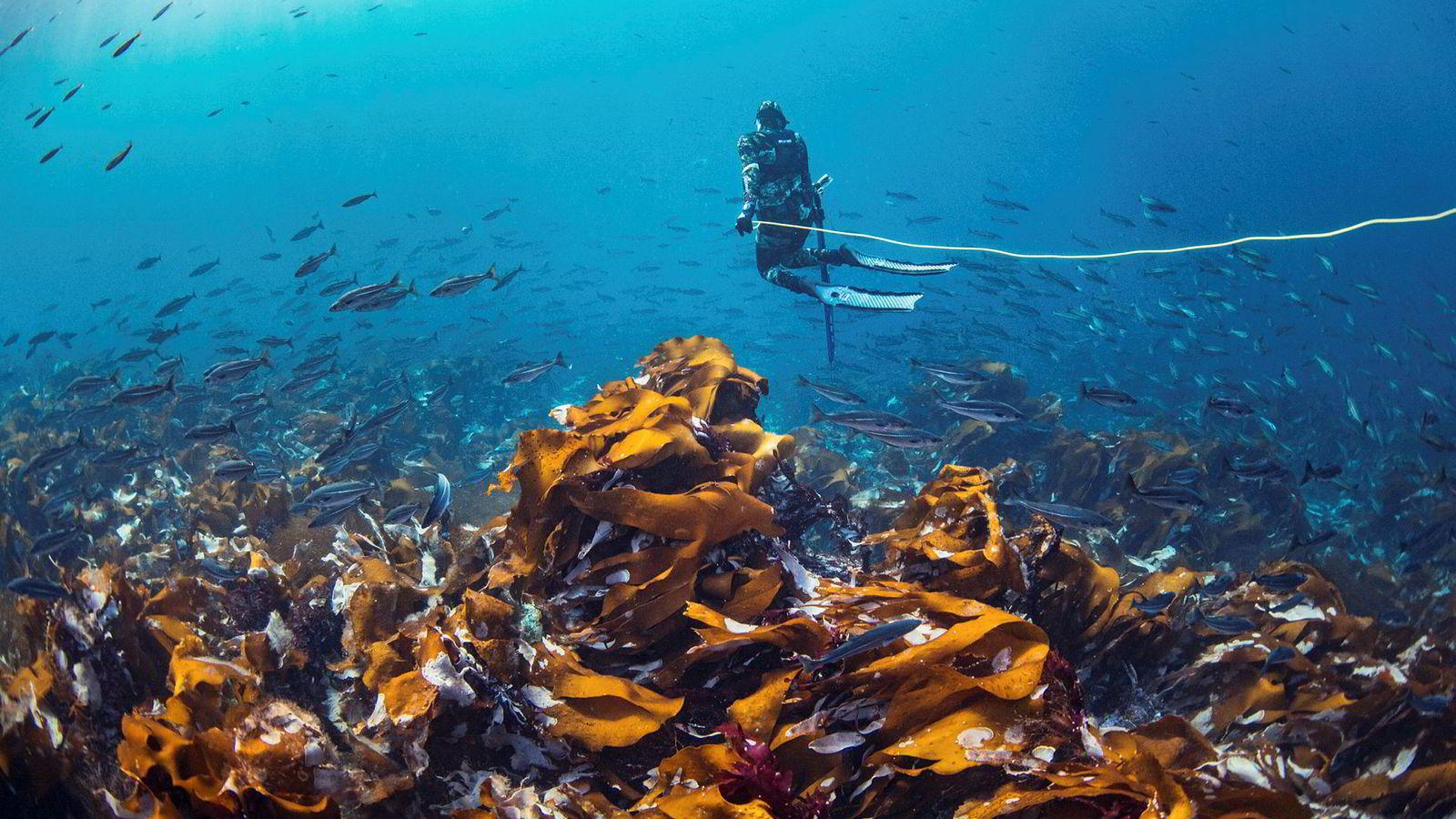 Michael Byø lar strømmen dra seg gjennom vannmassene i Salstraumen, verdens sterkeste tidevannstrøm. Å fridykke og jakte i de sterke vannmassene kan være farlig om man ikke dykker på riktig sted, til riktig tid.