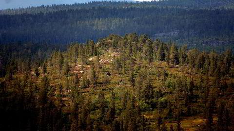 Norge bør også jobbe for at skog inkluderes i internasjonale kvotemarkeder, slik at flere finner det lønnsomt å betale for å verne, skriver Bård Harstad. Her fra Trillemarka.